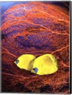 Jeweled Fish II Fine-Art Print