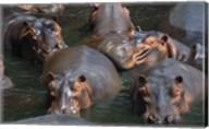 Hippo Pod Fine-Art Print