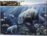 Manatee And Calf Fine-Art Print