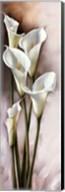 CALLAS GRACIEUX I Fine-Art Print