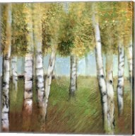 BIRCH WOODS II Fine-Art Print