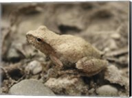 Close-up of a toad on a rock Fine-Art Print