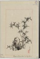 Rock and Bamboo in Garden Fine-Art Print