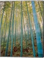 A Bamboo Forest, Sagano, Japan Fine-Art Print