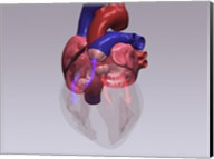 Close-up of a human heart with flow model Fine-Art Print