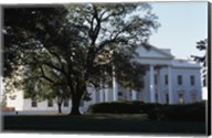 Tree in front of a government building, White House, Washington DC, USA Fine-Art Print
