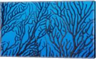 Sea Fan on a Reef, Belize Fine-Art Print