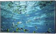Tropical Fish  Bora Bora  French Polynesia Fine-Art Print