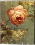 Rose on Sage Fine-Art Print