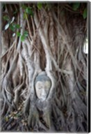 Buddha Head in the Roots of a Tree Fine-Art Print