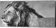Lion Eyes Fine-Art Print