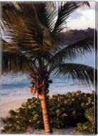 Sunset palms I Fine-Art Print