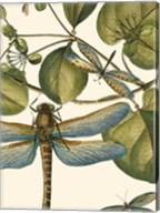 Dragonfly Medley I Fine-Art Print