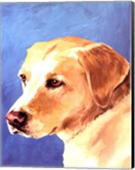 Dog Portrait-Yellow Lab Fine-Art Print