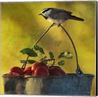 Apples & Chickadee Fine-Art Print