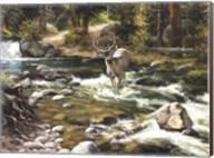 Buck in Midstream Fine-Art Print