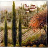 Tuscany Vineyard II Fine-Art Print