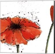 Not a California Poppy III on White Fine-Art Print