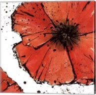 Not a California Poppy on White IV Fine-Art Print