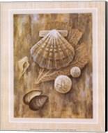 Assorted Shells Fine-Art Print