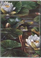 Frog in Lily Pond Fine-Art Print
