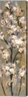 Almond Branch II Fine-Art Print