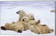 Polar Bear Playtime Fine-Art Print