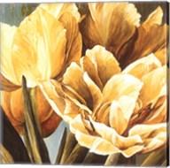 Floral Radiance II Fine-Art Print