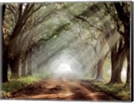 Evergreen Plantation B Fine-Art Print