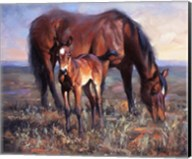 The Bay Filly Fine-Art Print