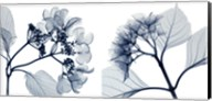 Hydrangeas [Positive] Fine-Art Print