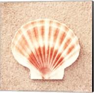 Scallop Shell Fine-Art Print