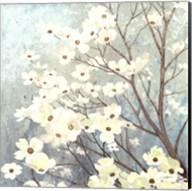 Dogwood Blossoms I Fine-Art Print