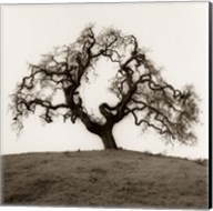 Hillside Oak Tree Fine-Art Print