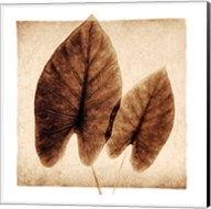 Taro Leaves Fine-Art Print