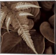 Painted Ferns I Fine-Art Print
