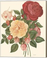 Vintage Roses I Fine-Art Print