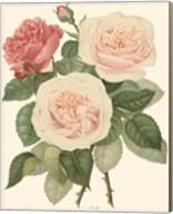Vintage Roses II Fine-Art Print