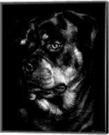 Canine Scratchboard XII Fine-Art Print