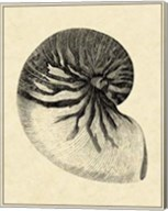 Vintage Shell I Fine-Art Print