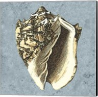 Stonewashed Shells I Fine-Art Print