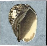 Stonewashed Shells II Fine-Art Print