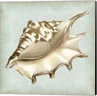 Sea Dream Shells IV Fine-Art Print