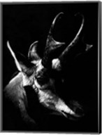 Wildlife Scratchboards II Fine-Art Print