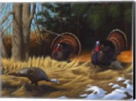 Turkies Fine-Art Print