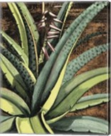 Graphic Aloe III Fine-Art Print