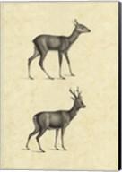 Vintage Deer I Fine-Art Print