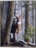 Simply Curious II Fine-Art Print