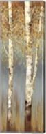 Butterscotch Birch Trees II Fine-Art Print