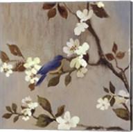 Apple Bloom III ( conversation mini) Fine-Art Print